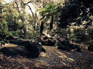 My tranquil spot at Descanso Gardens - in the woods at Feather Falls