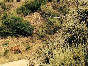 A deer grazes on the trail