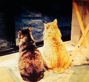 Grace, a traditional tabby and Tiger, a marmalade tabby, sit side by side gazing out of a window