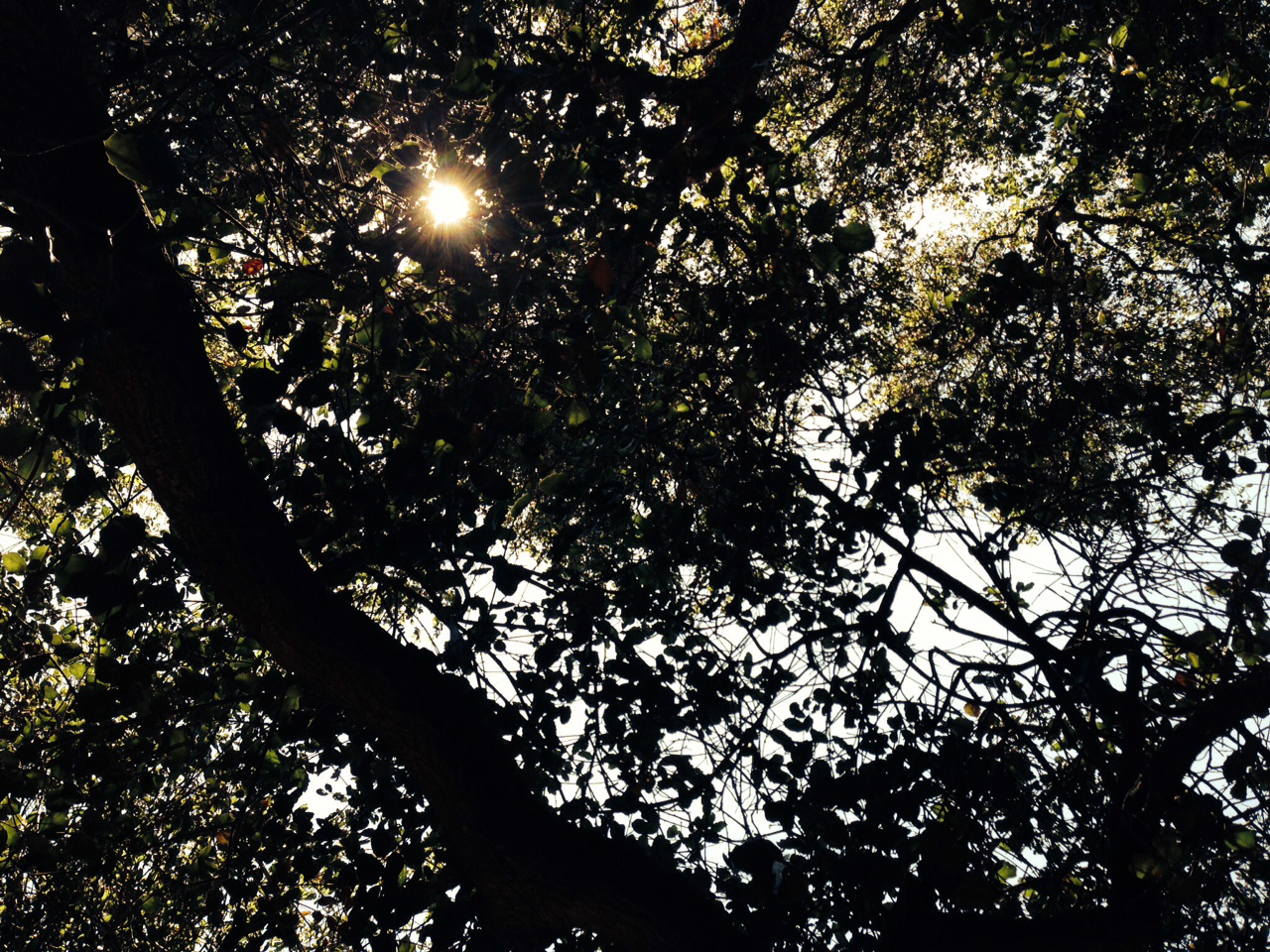 Sun shines above a canopy of leaves