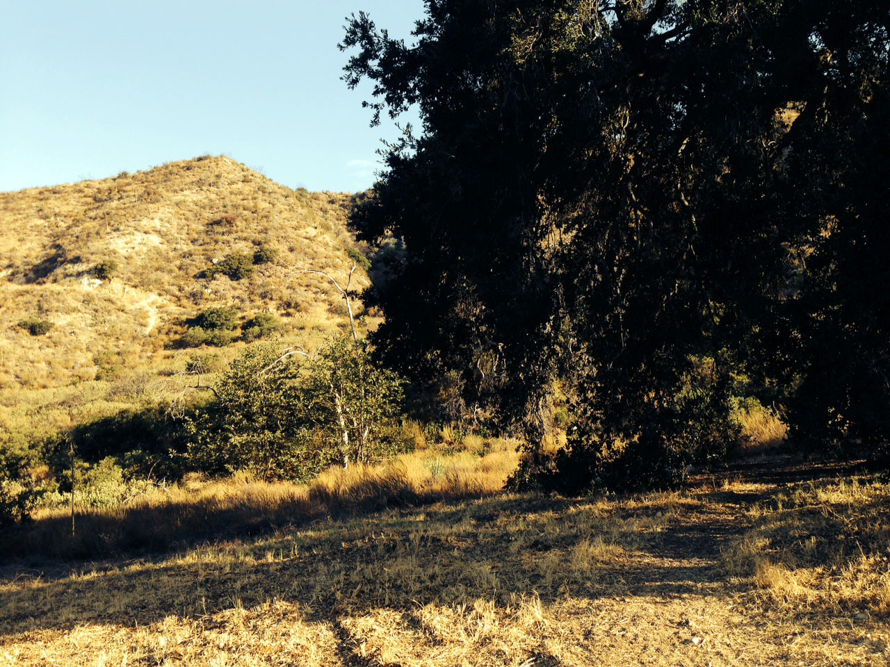 Big shady tree against the burnt foothills of the hiking trail
