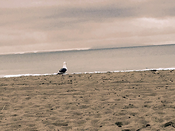Seagull on the sand looks out to sea on an overcast day