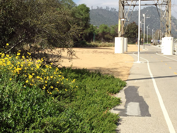 LA bike path - yellow flowers and trees one side, hard concrete and power lines on the other