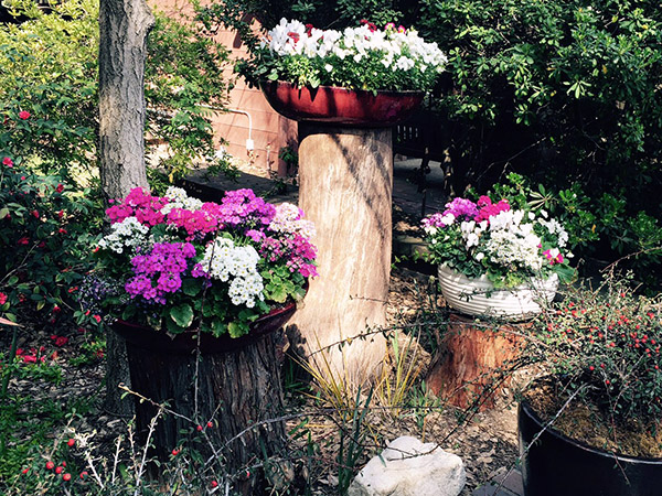 multiple pots filled with pink and white annuals