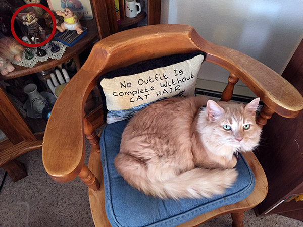 Orange furry cat on a chair with a pillow that says No Outfit is Complete Without Cat Hair