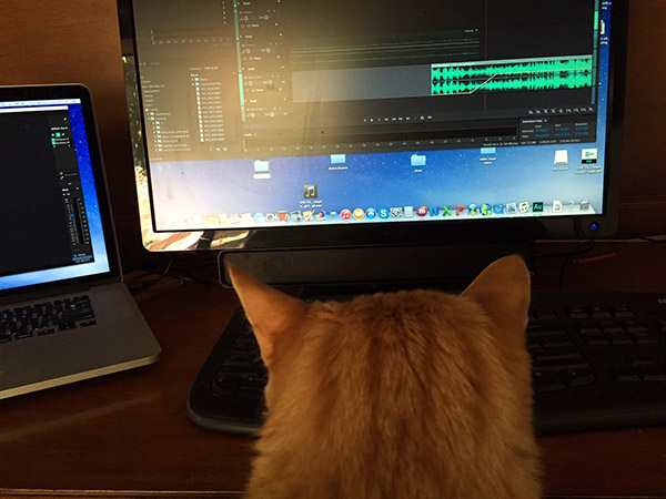 Tiger the cat in front of the monitor with the show's audio file editing software.