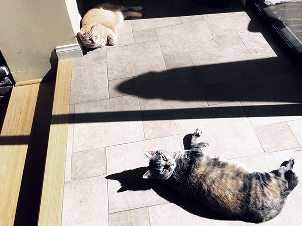 Tiger a marmalade cat, and his mama Gracie, a tortoise tabby, sun themselves on a tile floor near a window