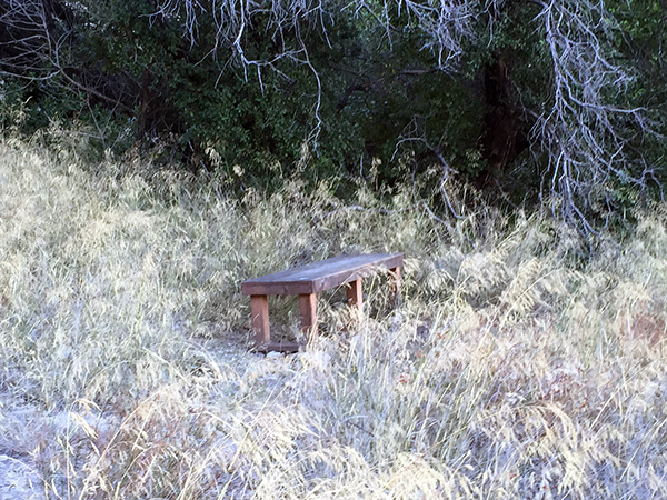 Wooden bench in some brush near a tree