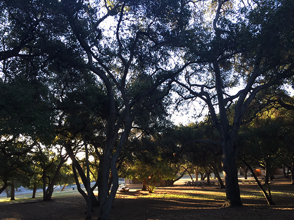 Trees at the park in early morning