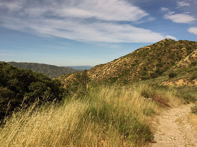 Blue skies, golden waving grass, winding hiking path down the foothills