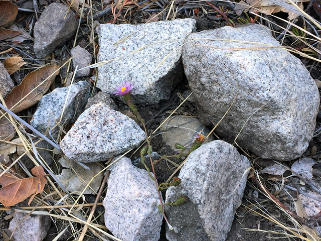A ring of stones with a wild flower on top
