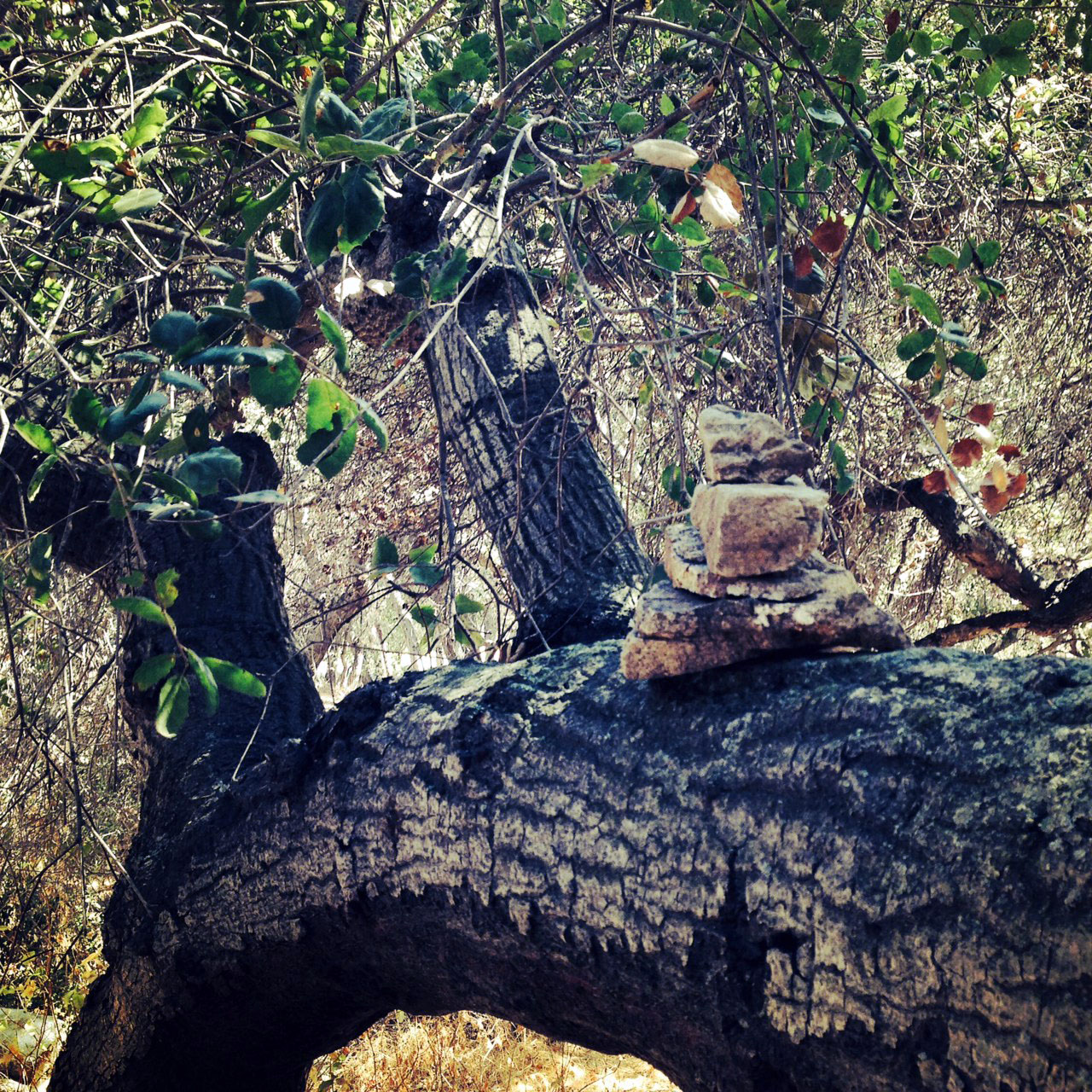 Prayer rocks stacked on a sturdy tree limb
