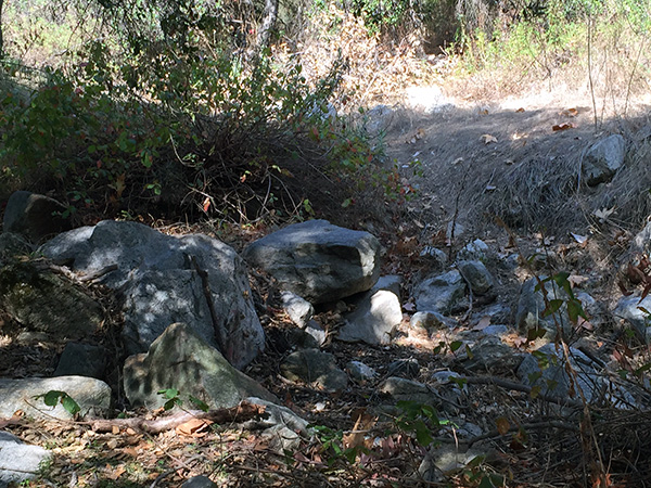 Boulders in the woods under trees