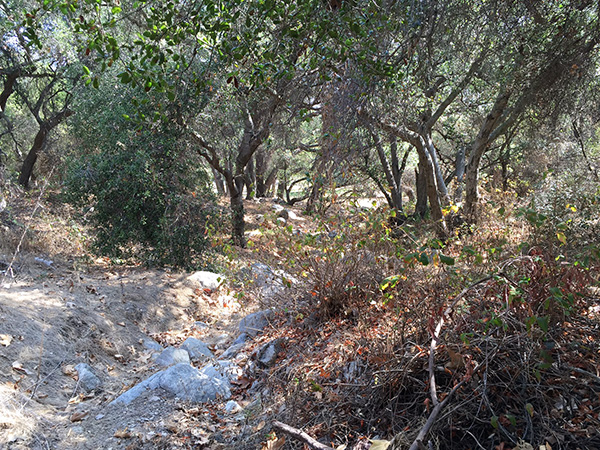 trees and brush in the back of the park