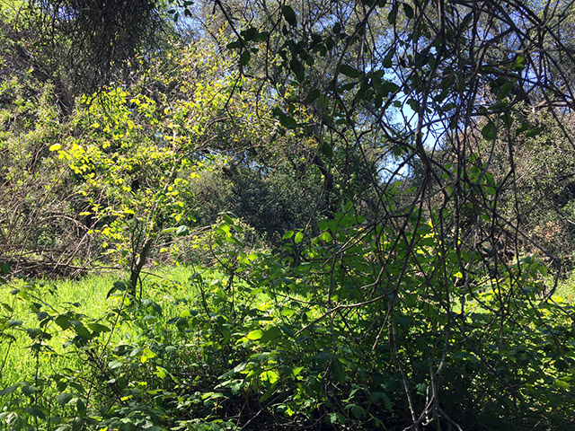 Lime green grasses under forest of different shades and textures of green.
