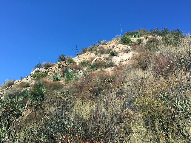 Brown cliff sparsely covered in foliage and bright blue sky.