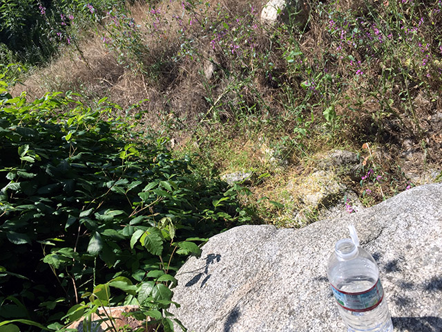 Water bottle on a large boulder in a green gully under trees.
