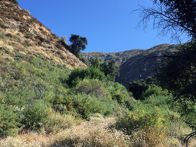 Bright blue skies above hiking trail in the foothills. Gorse and sage and brown dry grass.
